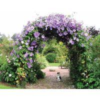 Теплицы и садовые конструкции