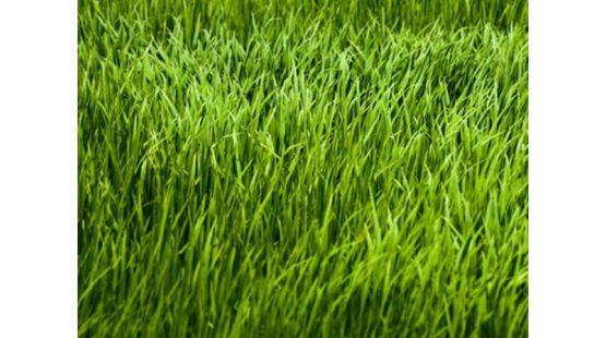 Большой выбор газонных трав